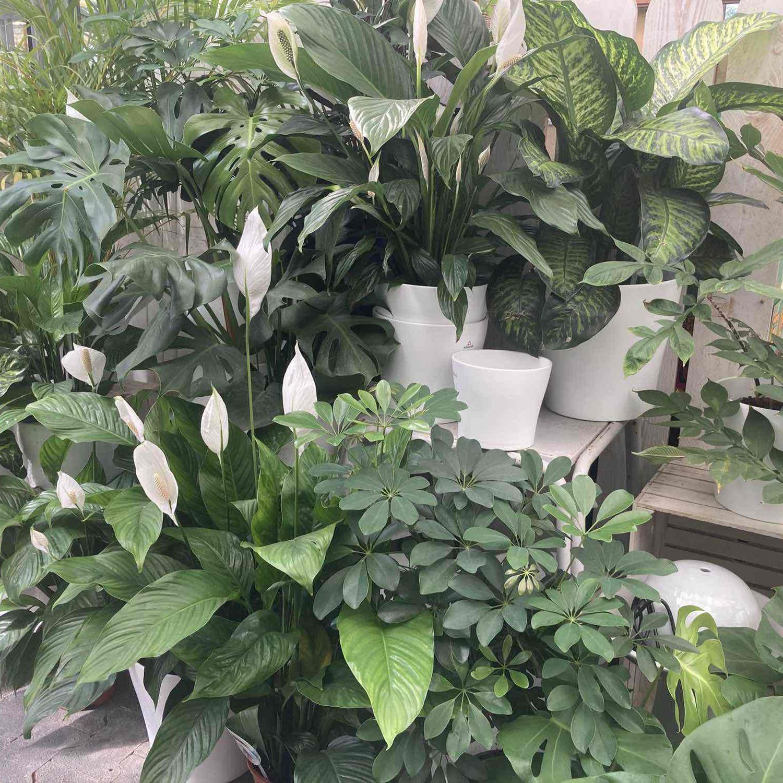 gruenpflanzen min