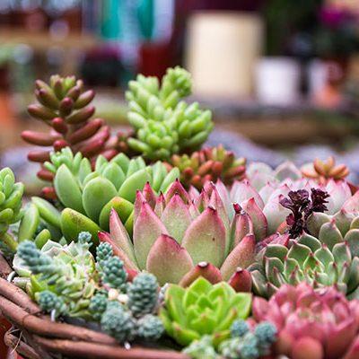 kateen und succulents beim gartencenter mueller